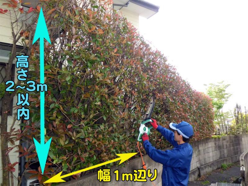 生垣の刈込み 高さ 2〜3m(m)