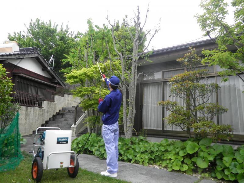 消毒(立木) 高さ 3m以下 (1本)