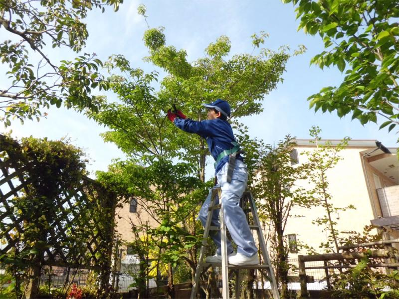 伸びすぎた枝葉の剪定、高さの調節を行います。  【春(3・4・5月)にお手入れするべき木】  ツバキ・サザンカ・ウメ・サクラ・ライラック・ハナミズキ・サツキ・ツツジ etc.  冬から春咲の花木全般(開花後のお手入れ)