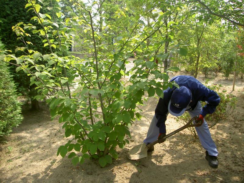 2月のお庭のお手入れ 『花木の植え替え』