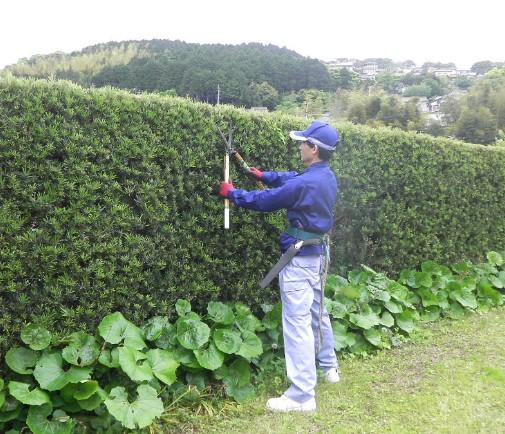 5月のお庭のお手入れ…『生け垣の刈込み』