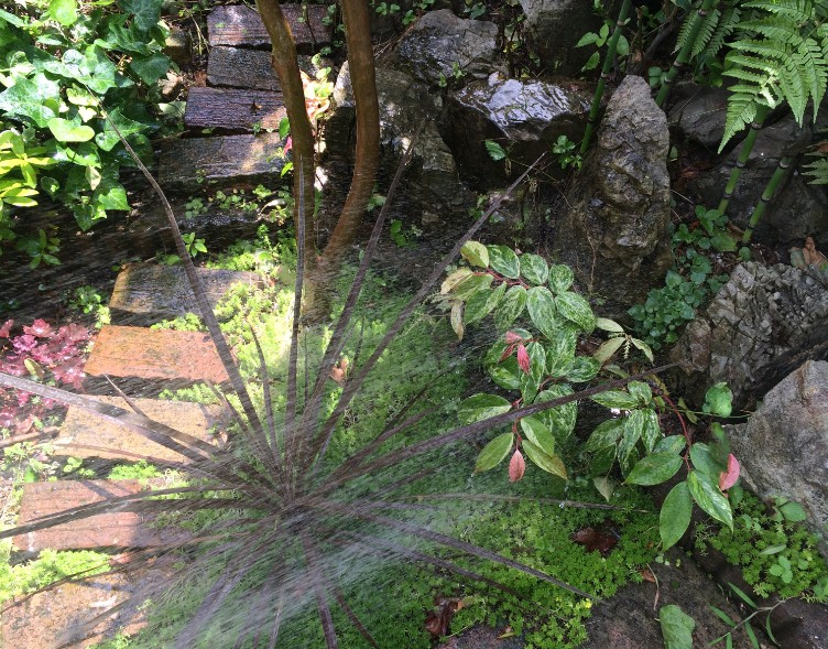 7月/8月のお庭のお手入れ…『灌水作業(水遣り)』