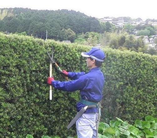 10月のお庭のお仕事…『化粧刈込み』