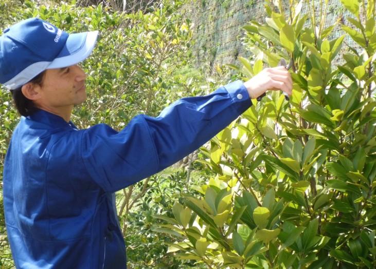 4月のお庭のお手入れ…『常緑樹の剪定』