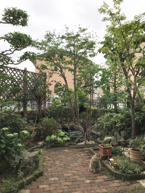 夏のお庭のお手入れの写真1