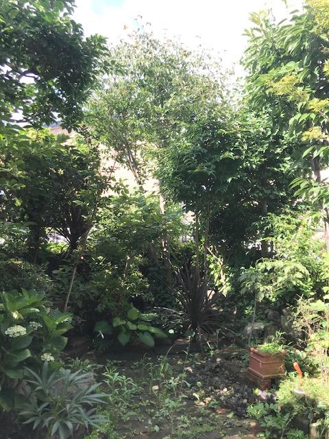 夏のお庭のお手入れの写真2