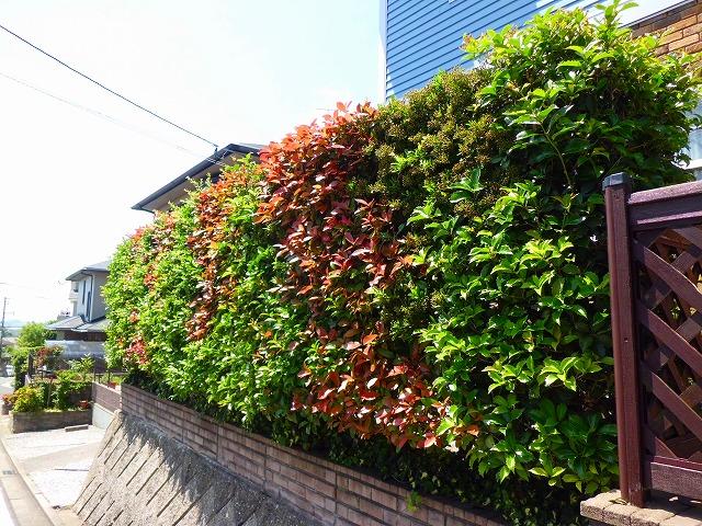 一年中 華やかな生垣の写真1