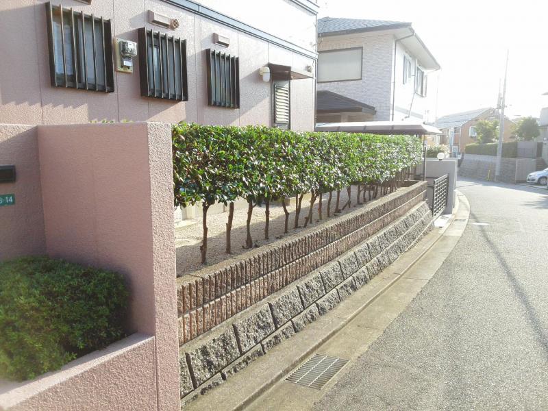 生垣(高さ1〜2m 長さ9m)剪定