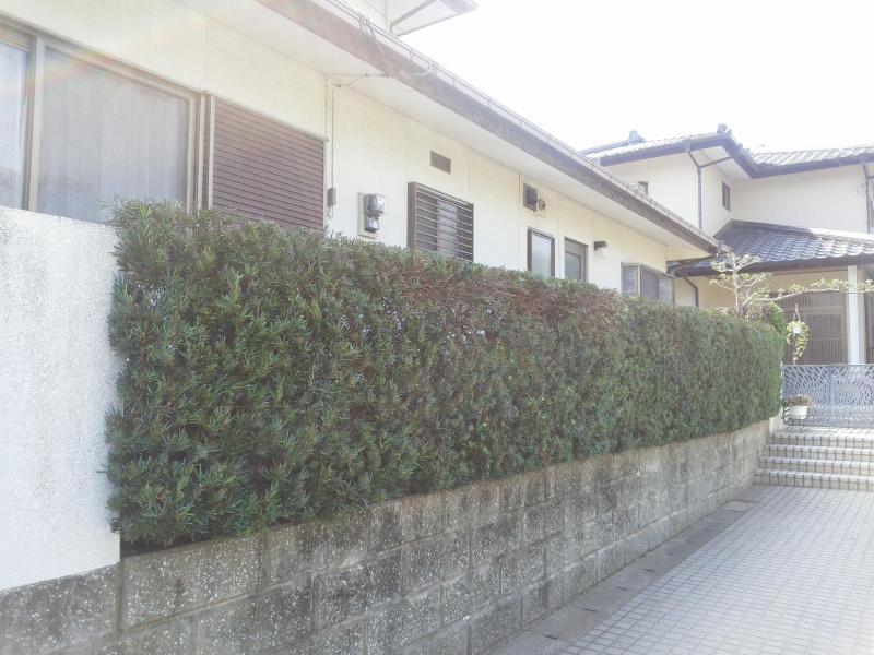 生垣(高さ1〜2m 11m)