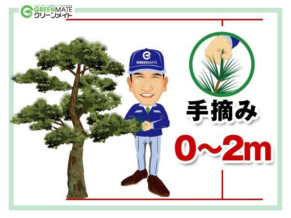 松の剪定0-2