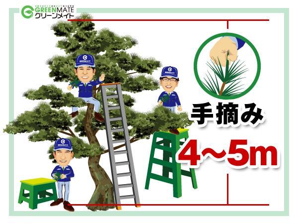 松の剪定4-5